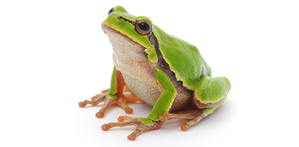 amphibians flashcards by proprofs