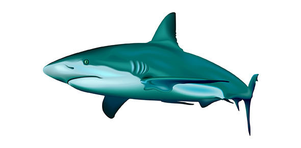 Functions Of Shark Structures