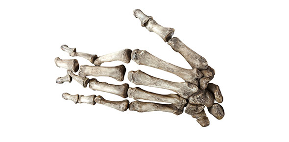 Bone Markings Review Flashcards By Proprofs
