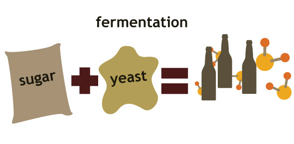 an overview of the experiment the fermentation occurrence of yeast merging with solution of sugar Overview of the engineering design process including problem identification, information retrieval, specification writing, development and analysis of alternative solutions, selection methodology, product safety, standardization, scheduling and cost estimating.