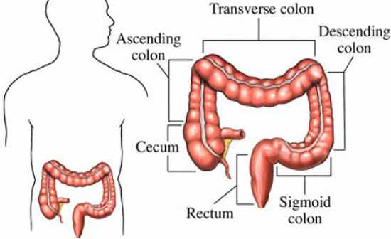 Flashcards Table On Anatomy And Physiology Digestive