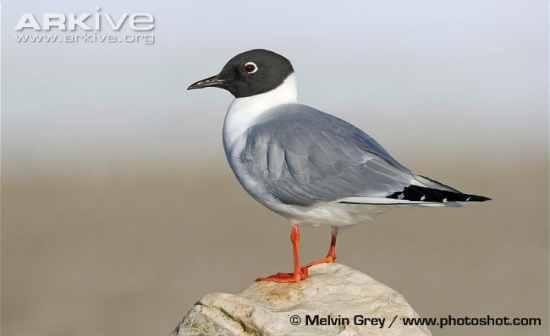 bird white breast black body head