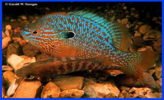 Flashcards Table On Arkansas Fish
