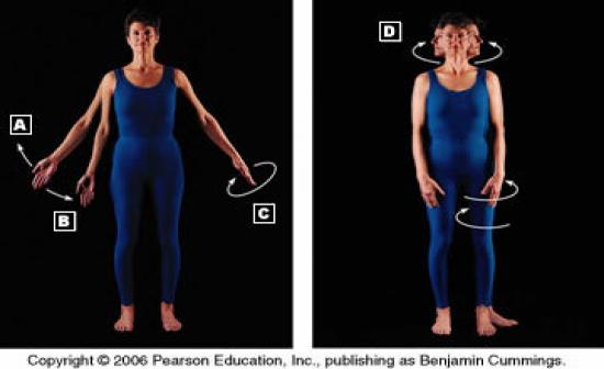 bone diagrams to label hap 1 skeletal system flashcards by proprofs  hap 1 skeletal system flashcards by proprofs