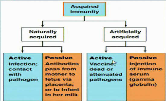 innate and acquired immunity essay example Immunity: types, components and characteristics of acquired immunity definition: immunity is the ability of the body to protect against all types of foreign bodies like bacteria, virus.