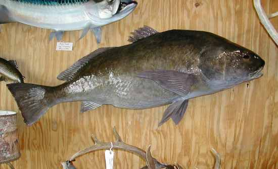 Flashcards Table On Arkansas Fish Flashcards