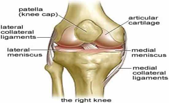 Knee muscles and bones flashcards by proprofs medial collateral ligament strong flat band extending from medial epicondyle of femur to medial condyle of tibia lateral collateral ligament thin ccuart Choice Image