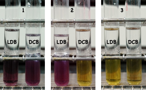 Lysine decarboxylase test reaction