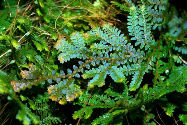 Nonvascular & Vascular Plants-Biology 112 Flashcards by ...