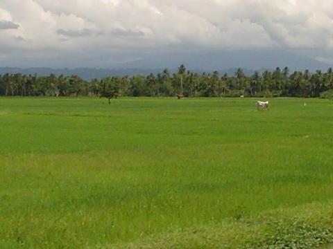 fertile land - photo #9