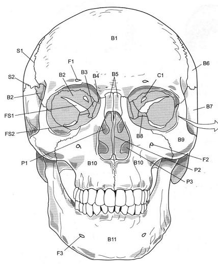 free axial skeleton coloring pages - photo#24