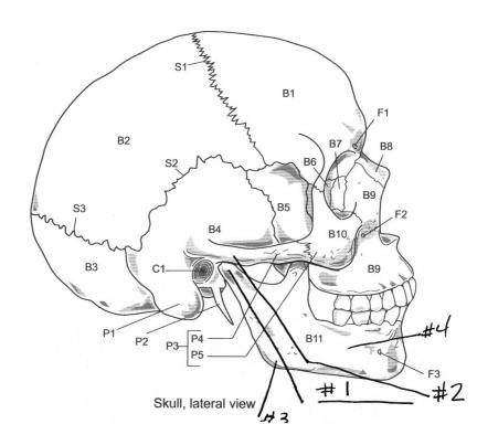 Printables Skull Labeling Worksheet skull worksheet abitlikethis axial skeleton labeling worksheet