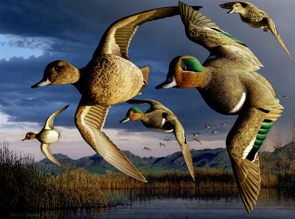How To Paint A Green Winged Teal
