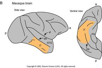 Neuropsychology in Temporal Lobe Epilepsy: Influences from