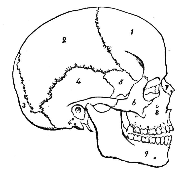 Flashcards Table on Bones of the skull