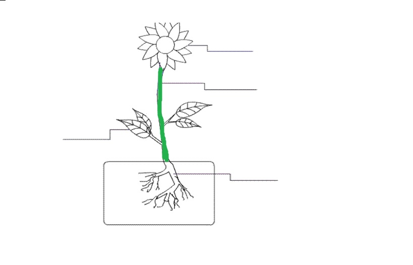 Parts Of A Plant And Flower Flashcards by ProProfs